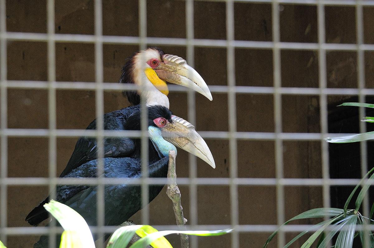 070-bali-birdpark-web