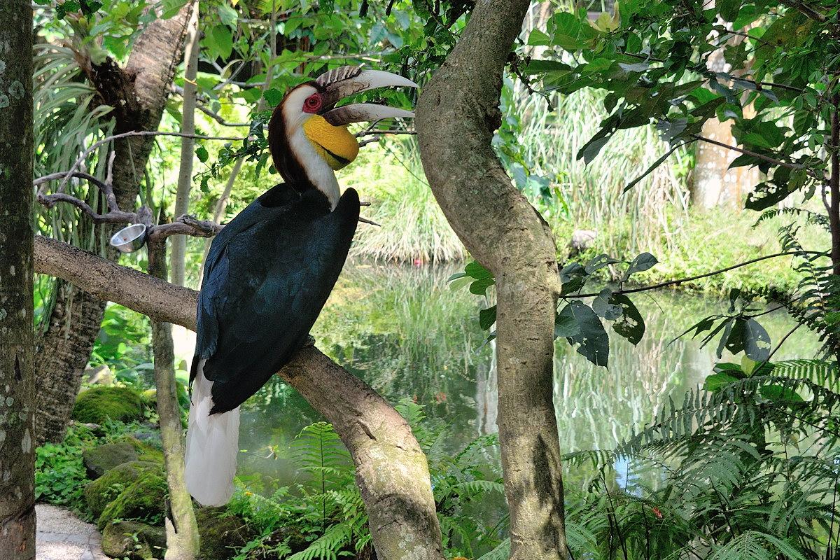 072-bali-birdpark-06-web