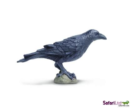 150829_Raven_resized