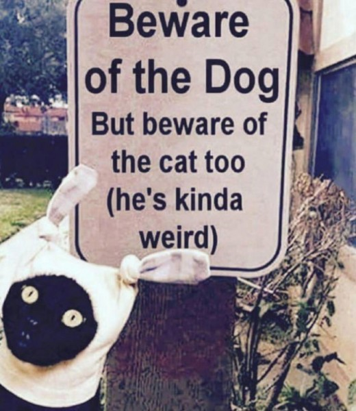 weird_cat