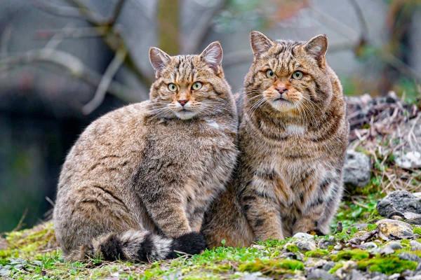 ужос_коты