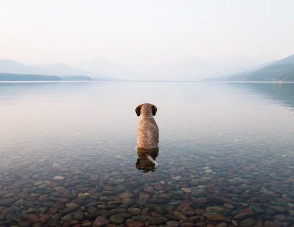 одиночество_псин