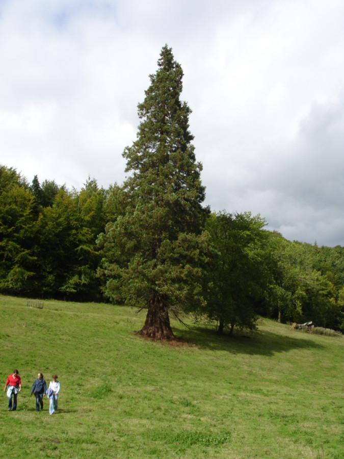 Tree dedicated to Michael Gothard