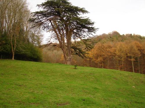 Woodchester 18 November 2011