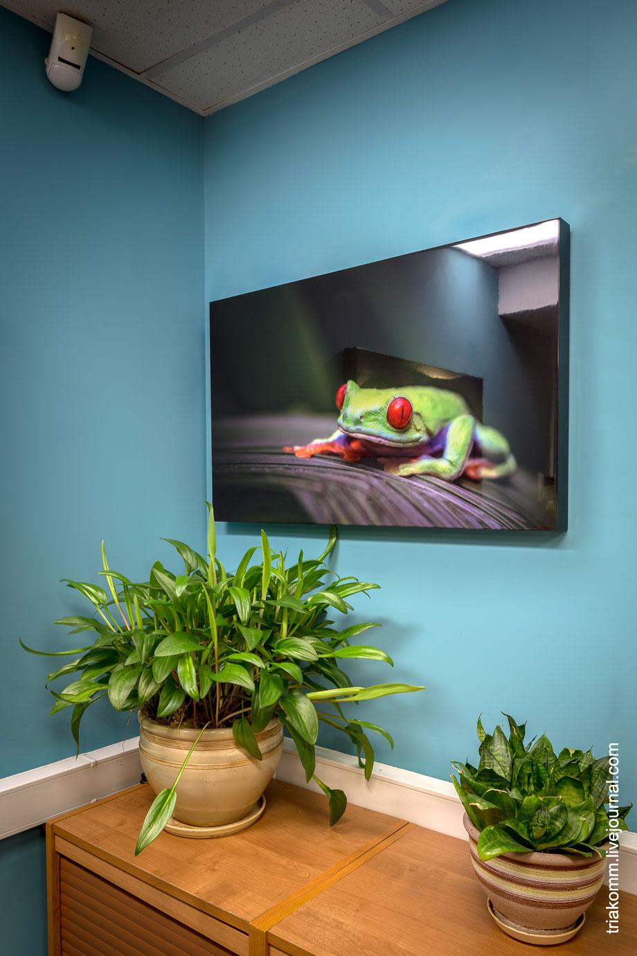 Цветное фото экзотической лягушки на дереве
