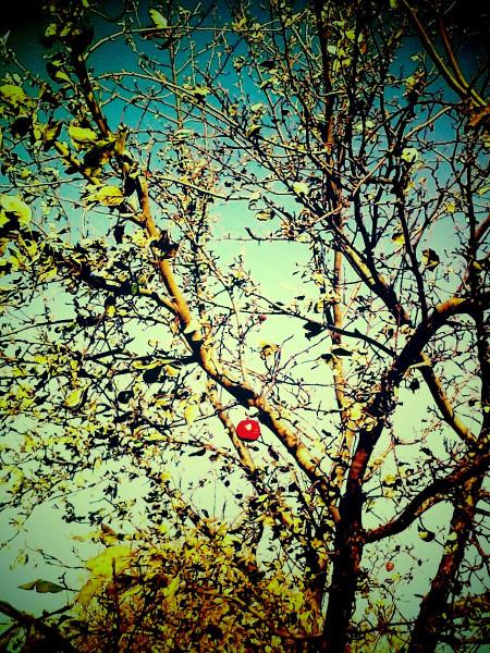 последнее яблоко