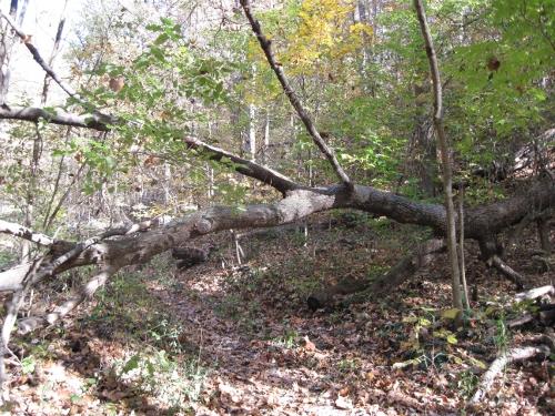 Squirrel Overpass