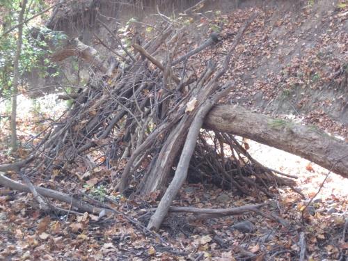 Beaver Shack?