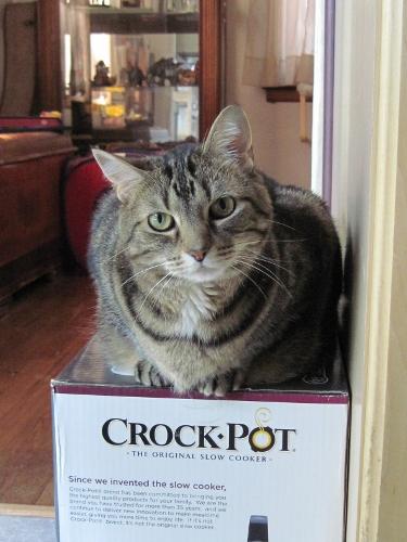 A Load of Crock?