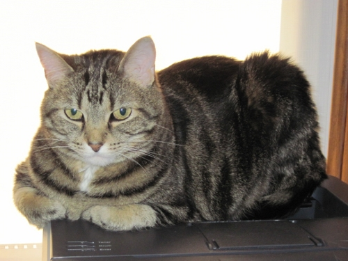Lucy, the Kitty Loaf