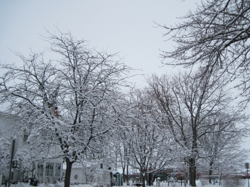 Snow Laden View 1