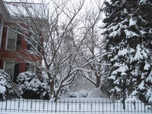 Snow Laden View 3