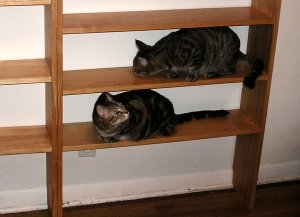 Linus & Lucy Explore the New Shelves