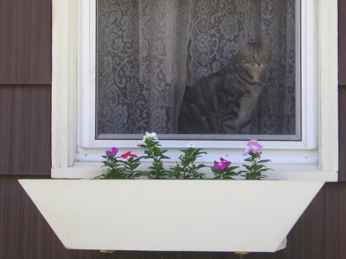 Lucy checks out the flowerbox