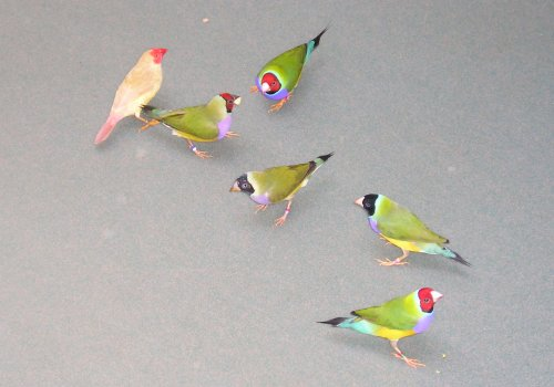 Birdies at my feet