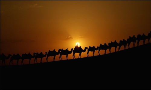 Караван-в-пустыне-Xiangshawan-в-автономном-районе-Внутренняя-Монголия-на-севере-Китая.-Feng-Li.Getty-Images.