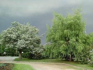 Денежное дерево-small