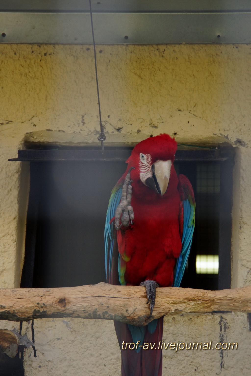 Парк птиц Воробьи