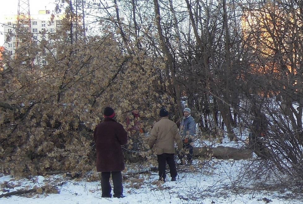 Сквер за Березкой декабрь-22