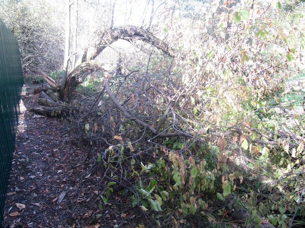 дерево_повалено