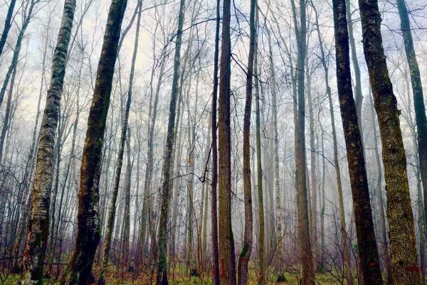 Троицкий лес Октябрьский пр2