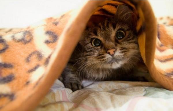 Видеть полосатого кота, идущего по дороге к городу, - этот сон говорит о том, что перед появлением великого человека, который принесет мудрость свыше, люди узнают кота или другое животное, которое будет прислано как знак.