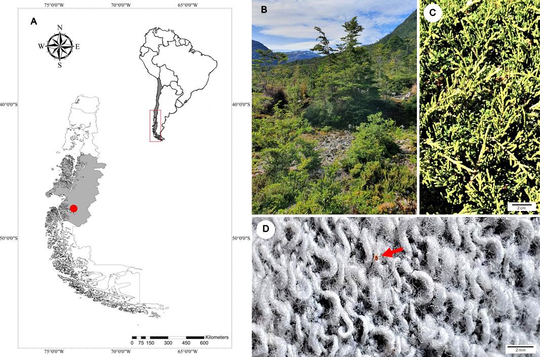 Тропическая инфекция на субполярной территории