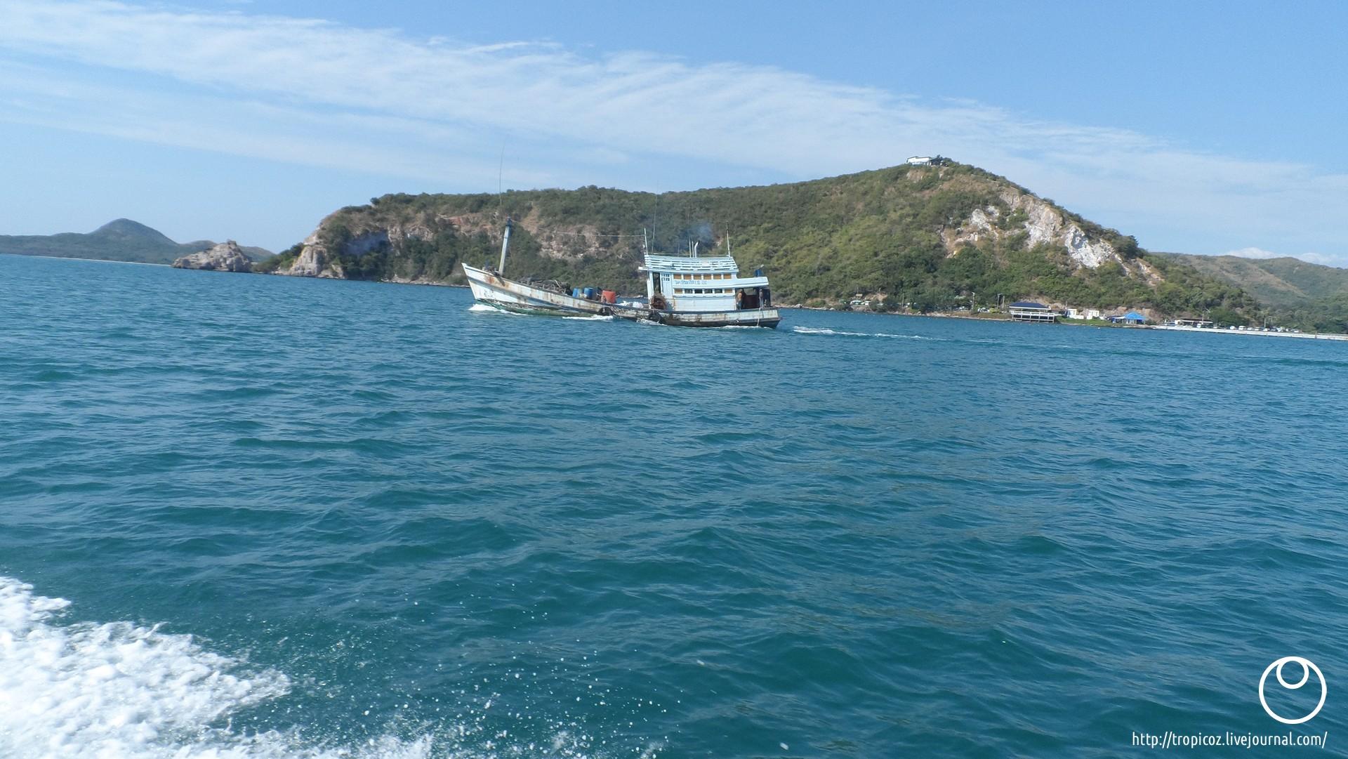 Острова зелёных черепашек * ТропикоZ - 00014