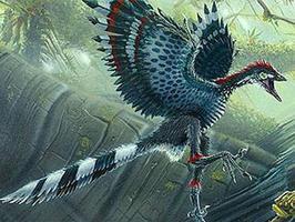 flying-dinosaur-download-free-widescreen-hd-flying-dinosaur-2619075