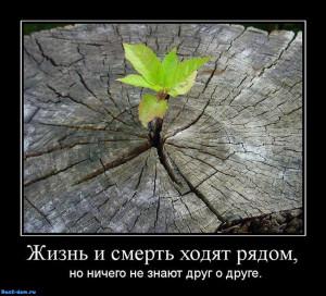 Жизнь-и-смерть-ходят-рядом-но-ничего-не-знают-друг-о-друге.