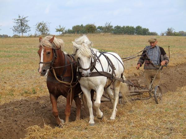 Farmer_plowing