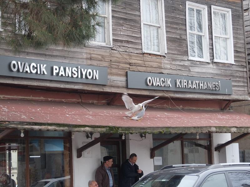 DSCF9252.JPG Шиле - турецкий курорт Шиле – турецкий курорт 2565854 original