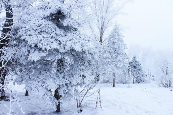 зима волгоград