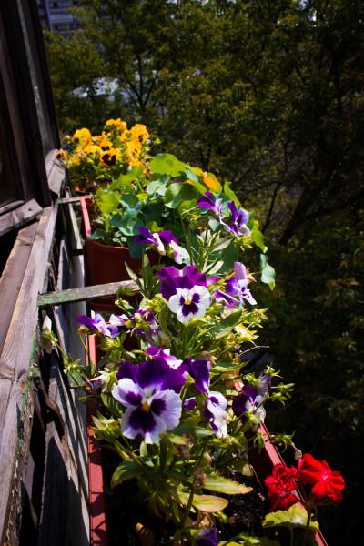 balcon (1 of 1)