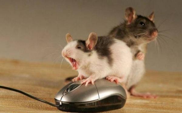 hamster порно подростков домашнее видео
