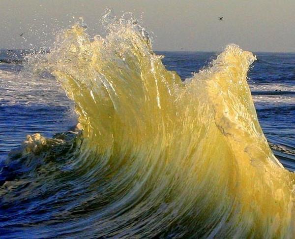 Mirovoy-okean