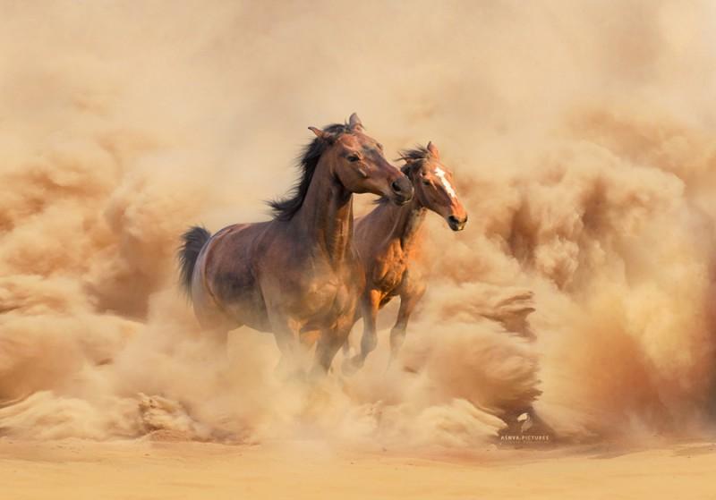 В песчаной буре. Автор фото: Виктория Бондаренко