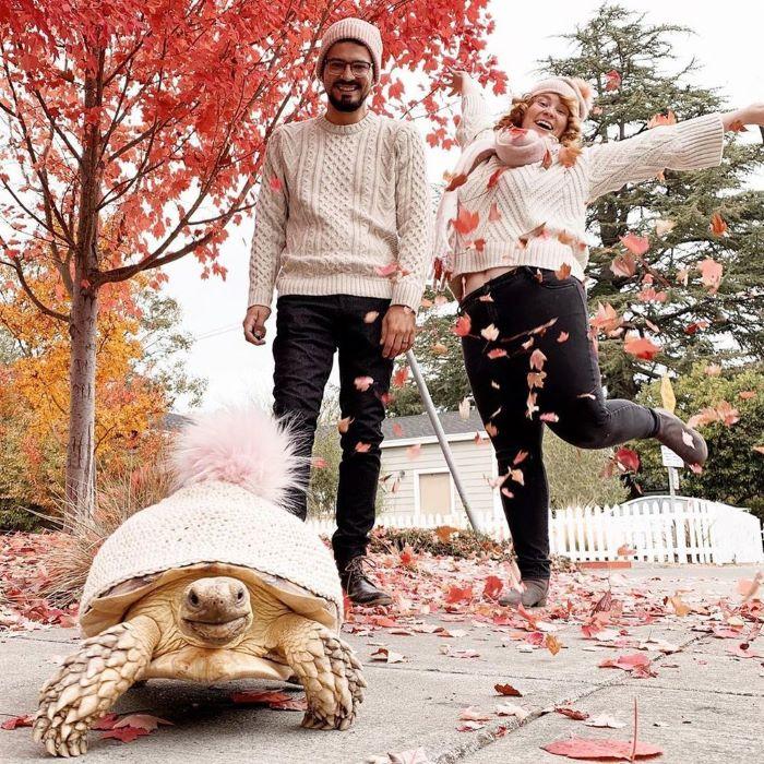 """Гламурная черепаха Этель с """"родителями"""" - Кейси Кучински и Дэниэлем Родригез"""