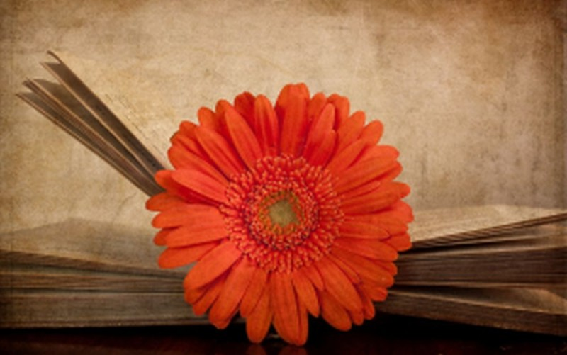 Всем писателям, поэтам, всем творческим, пишущим людям Земли!