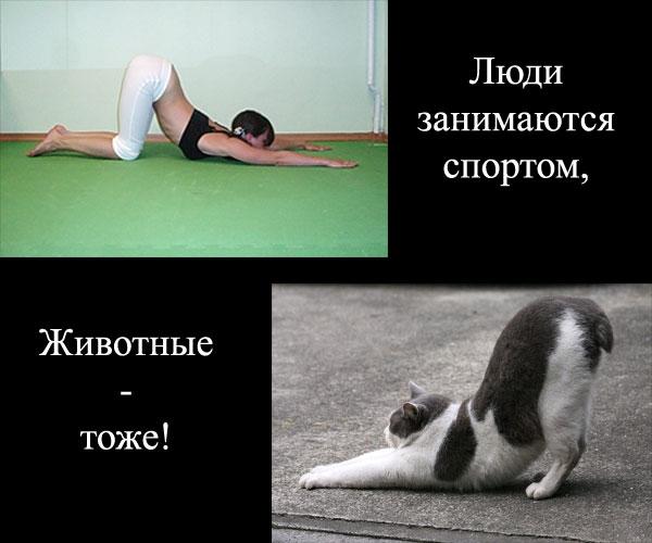 2 спорт
