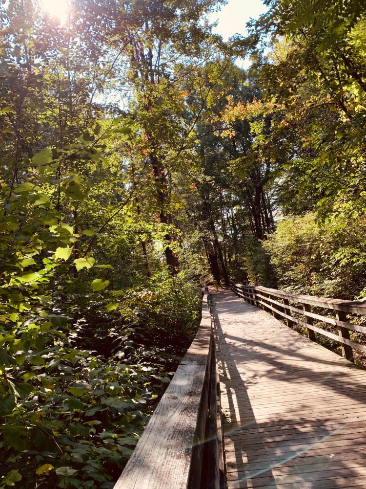 В поисках Осенних листьев.....