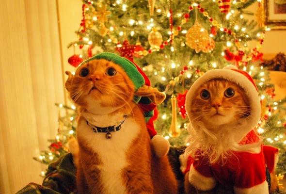 cat-christmas