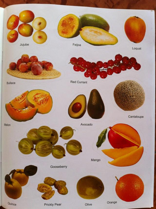 выполняет все фрукты мира с названиями и картинками багз банни картинки