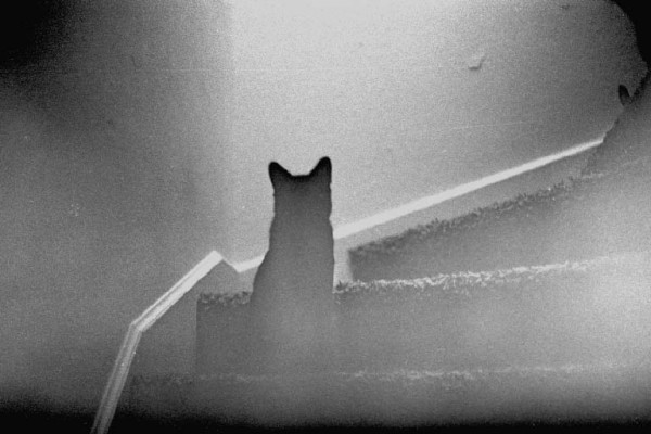 Foxys ghost cat
