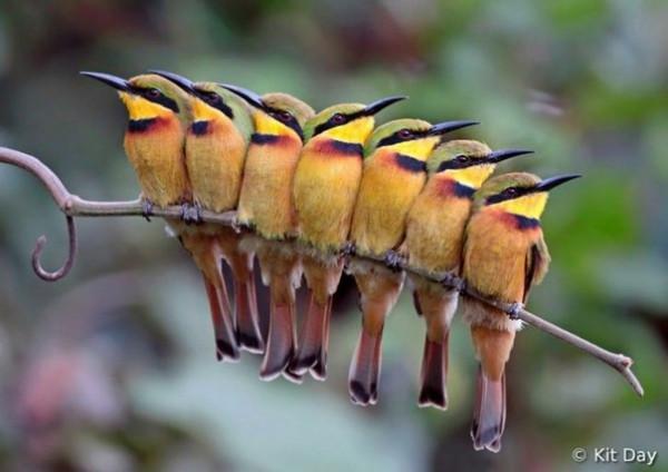птицы в утро