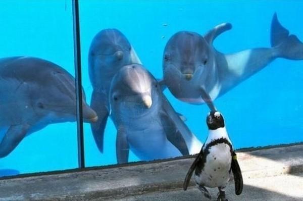 котэ пингвин-зазнайка