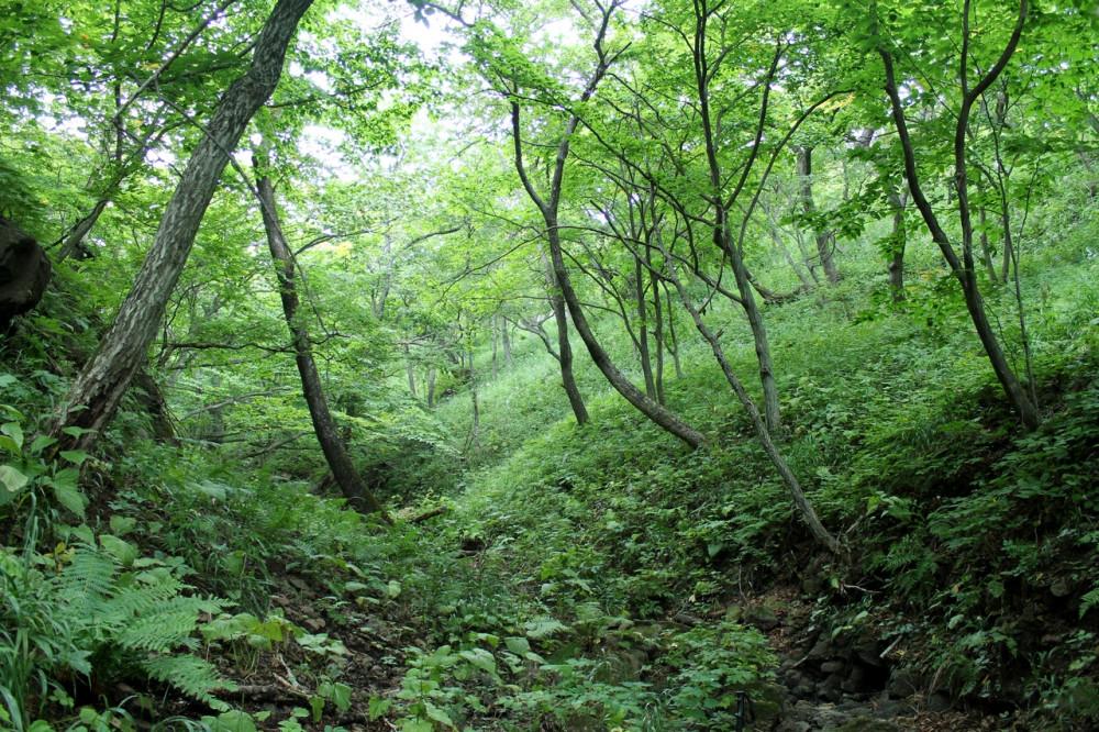 Приморский лес