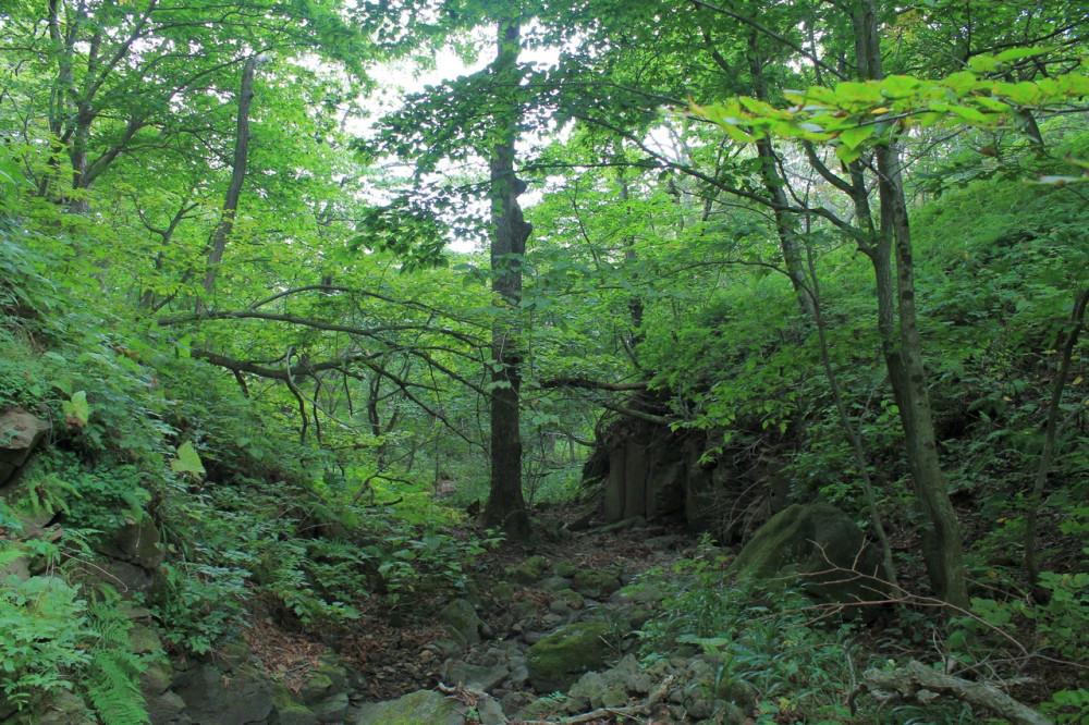 Лес в сухом ручье 1