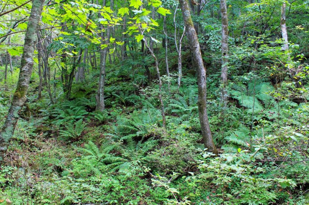 Лес и папоротник