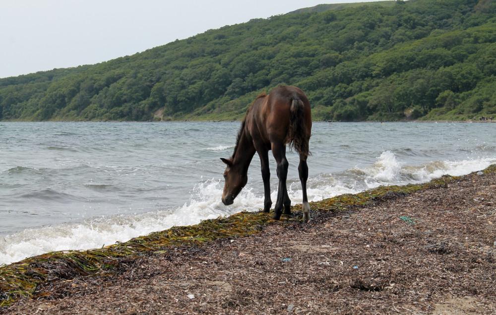 Мгновения (лошадь)